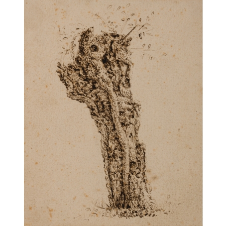 Claes van Beresteyn (Haarlem 1629-1684 Haarlem) Study of a truncated willow tree (c. 1650)